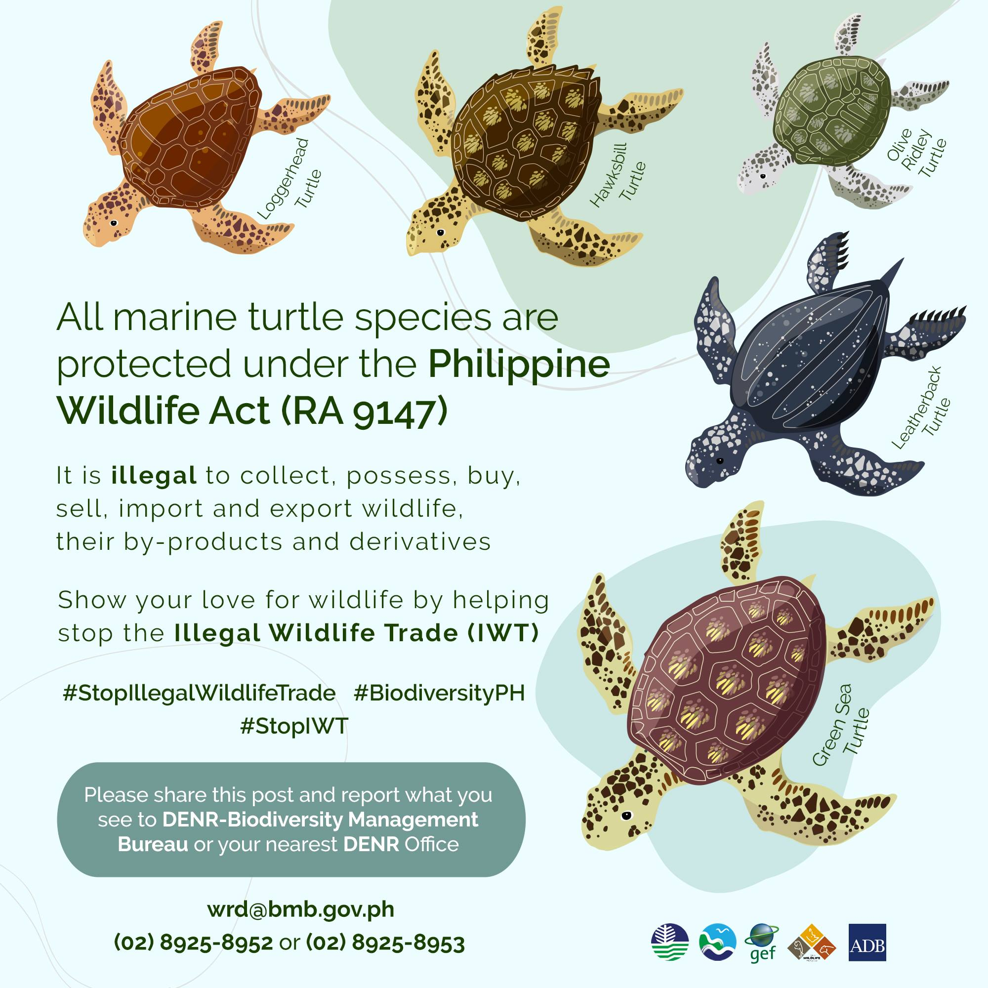 DENR IWT Species Spotlights (Marine Turtles)