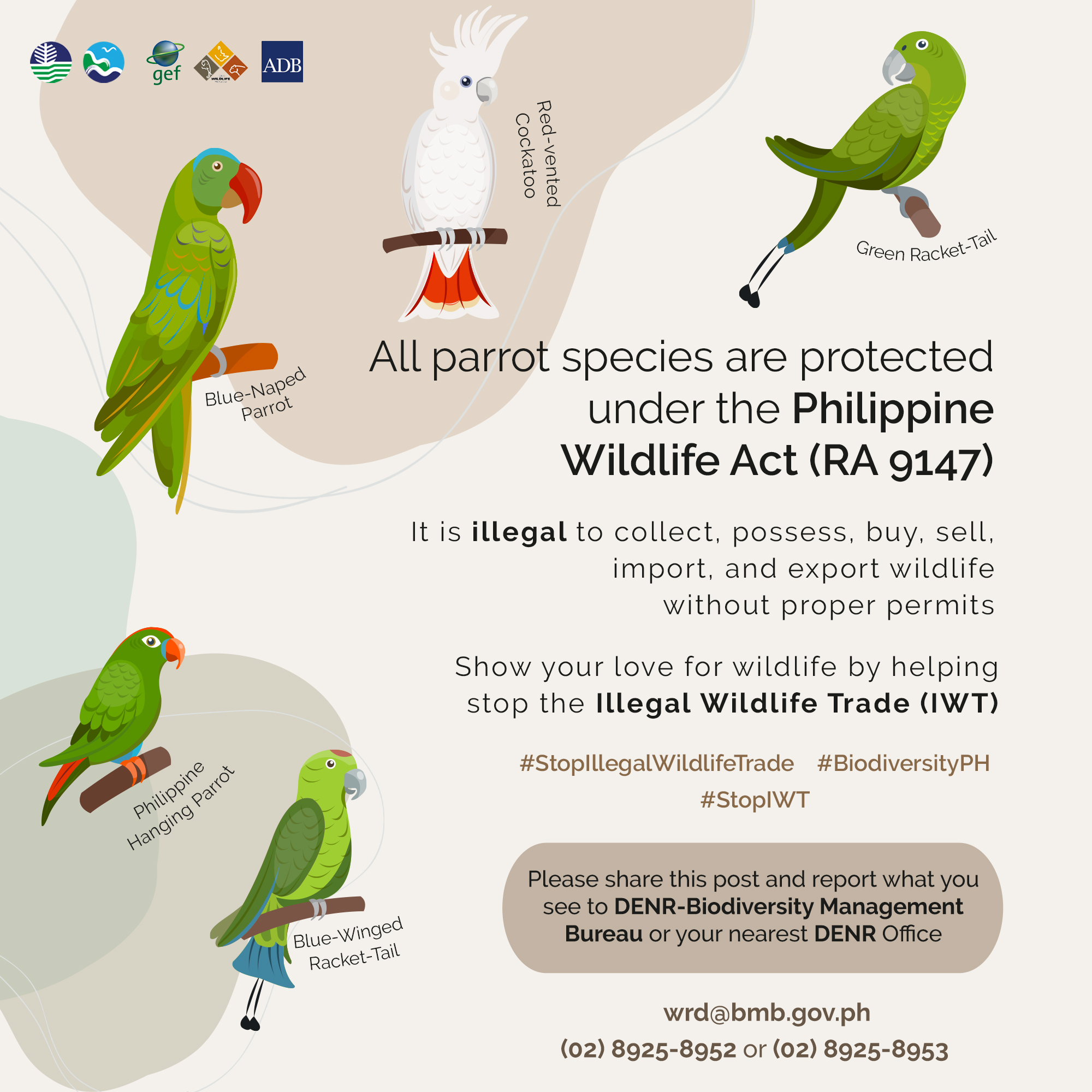DENR IWT Species Spotlights (Native Parrots)